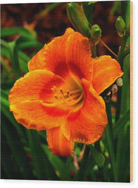 Heart Lily Wood Print by Paul Anderson