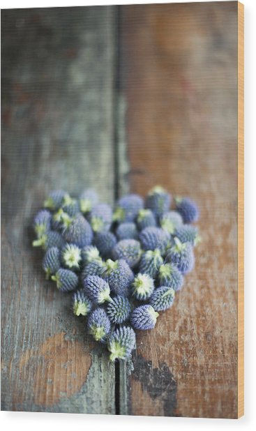 Heart Shaped Blue Thistle Buds Wood Print