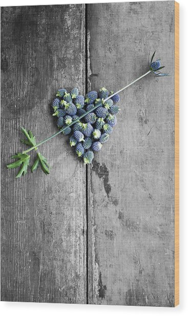 Heart Shaped Blue Thistle Buds With Arrow Stem Wood Print