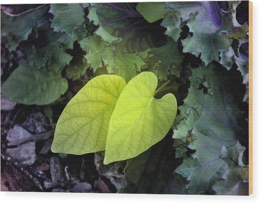Hearts In Nature Wood Print