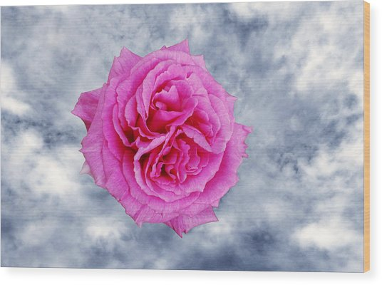 Heavenly Rose Wood Print by Terence Davis