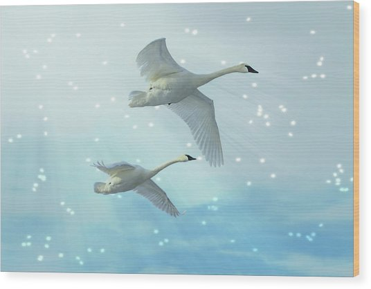 Heavenly Swan Flight Wood Print