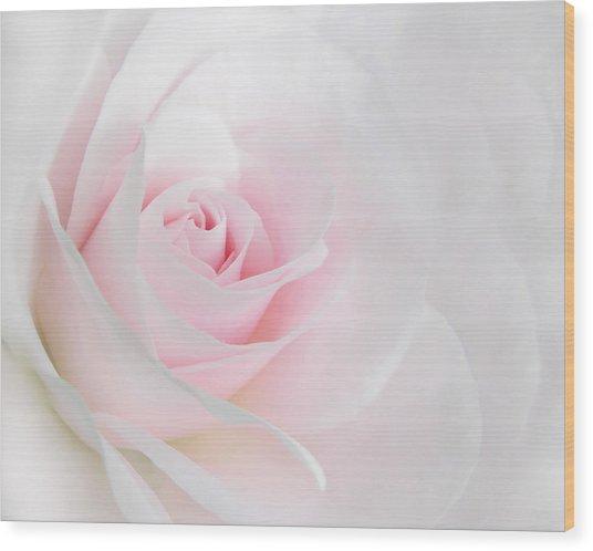 Heaven's Light Pink Rose Flower Wood Print