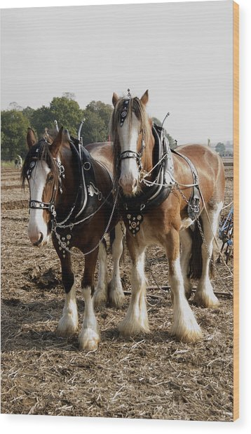 Heavy Horses Wood Print by Gerry Walden