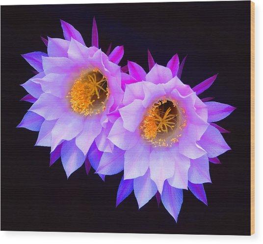 Hedgehog Cactus Flower Wood Print