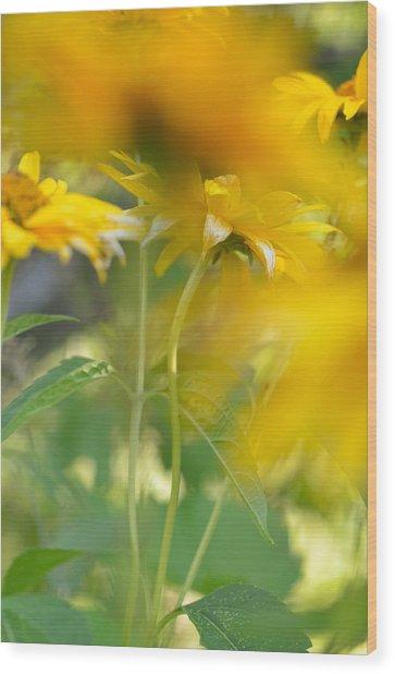 Heliopsis Blur Wood Print