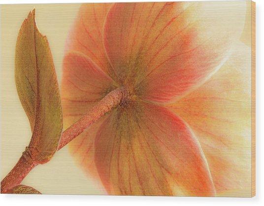 Hellebore Wood Print