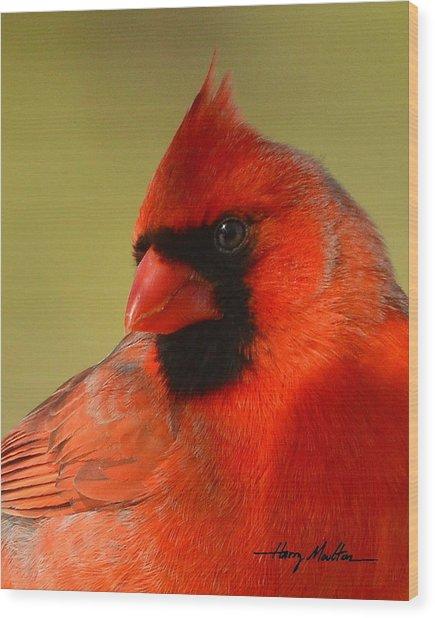 Hello Red Wood Print