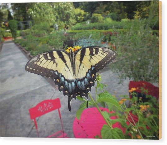 Hello Swallowtail  Wood Print