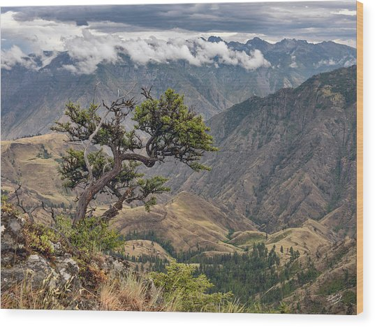 Hells Canyon Wood Print by Leland D Howard