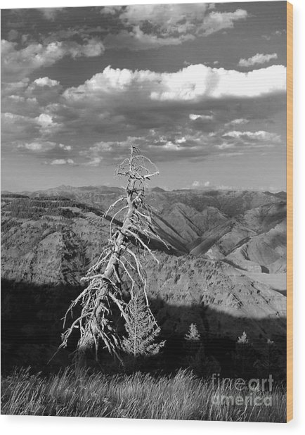 Hell's Canyon National Park Wood Print by Diane E Berry