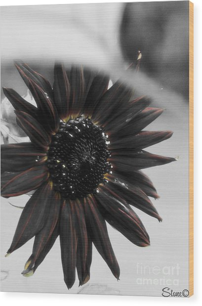 Hells Sunflower Wood Print