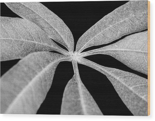 Hemp Tree Leaf Wood Print