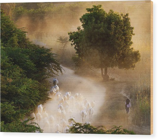 herd and farmer going home in the evening, Bagan Myanmar Wood Print