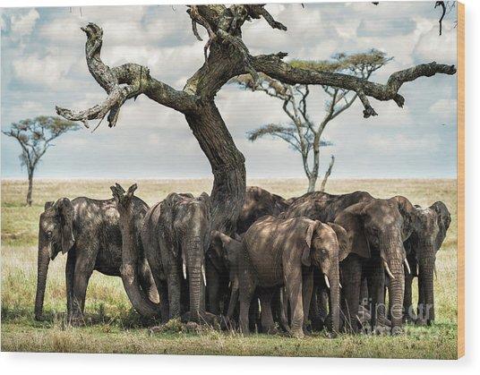Herd Of Elephants Under A Tree In Serengeti Wood Print