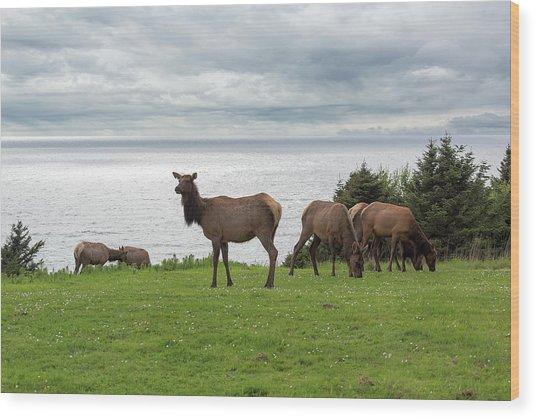 Herd Of Elk At Ecola State Park Wood Print