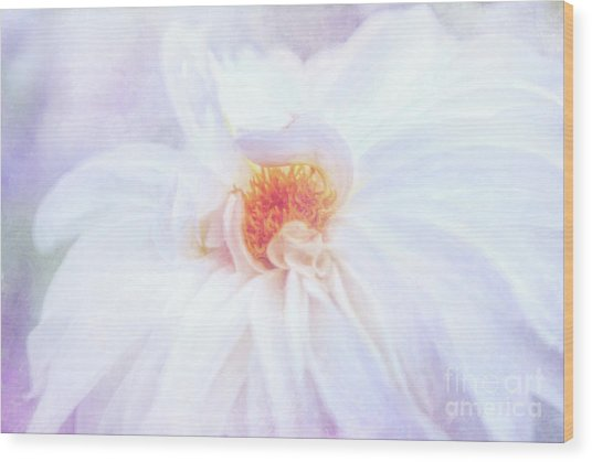 Here Comes The Bride - A Beautiful White Dahlia Wood Print