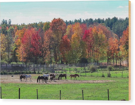 Heritage Farm In Easthampton, Ma Wood Print