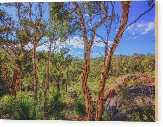 Heritage View, John Forest National Park Wood Print