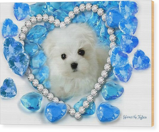 Hermes The Maltese And Blue Hearts Wood Print