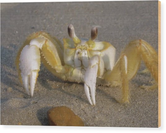 Hermit Crab Wood Print by JAMART Photography