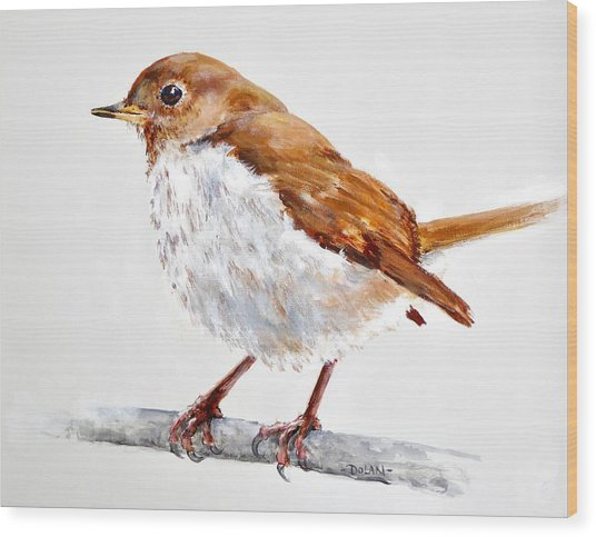 Hermit Thrush - Best 2017 - Acrylic Wood Print