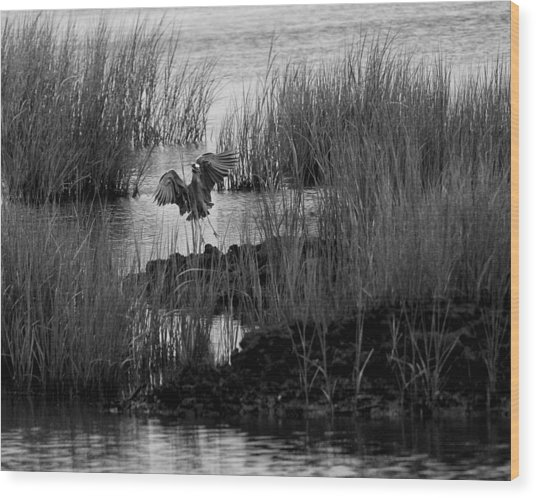 Heron And Grass In B/w Wood Print