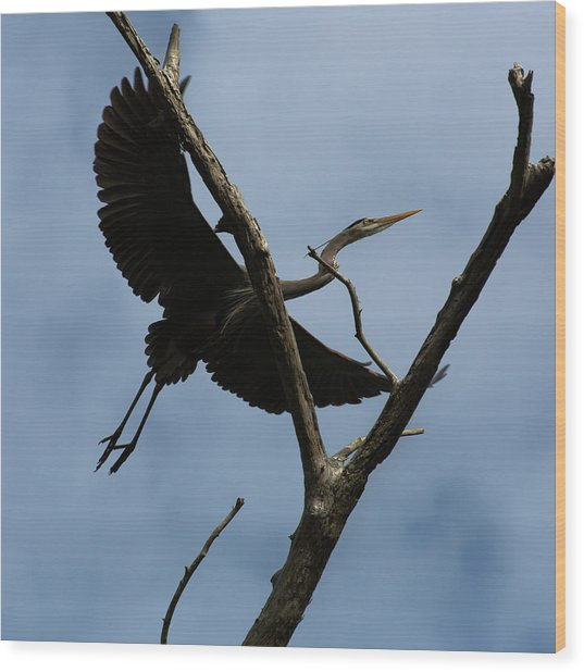 Heron Flight Wood Print