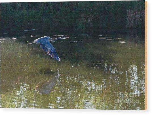 Heron Flight Wood Print