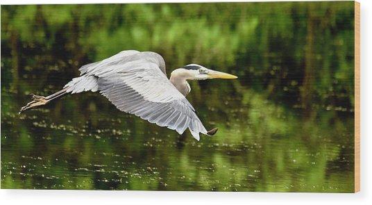 Heron In Flight Wood Print