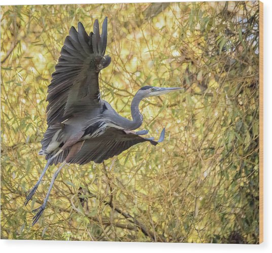 Heron In Flight Wood Print