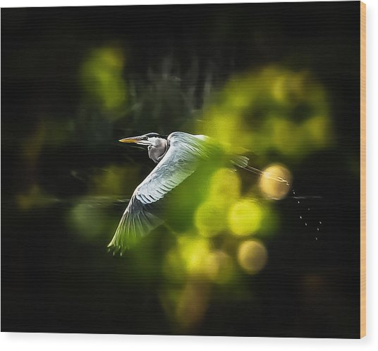 Heron Launch Wood Print