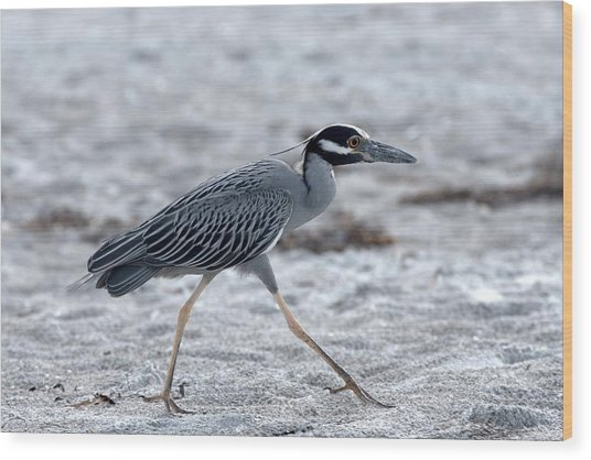 Yellow-crowned Night Heron On A Mission Wood Print