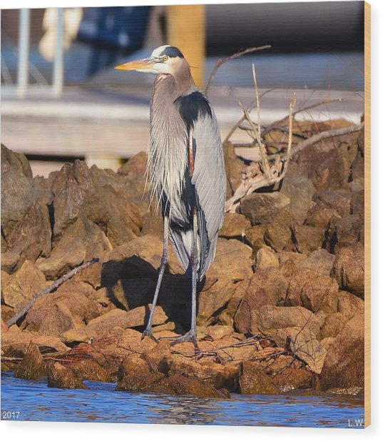 Heron On The Rocks Wood Print