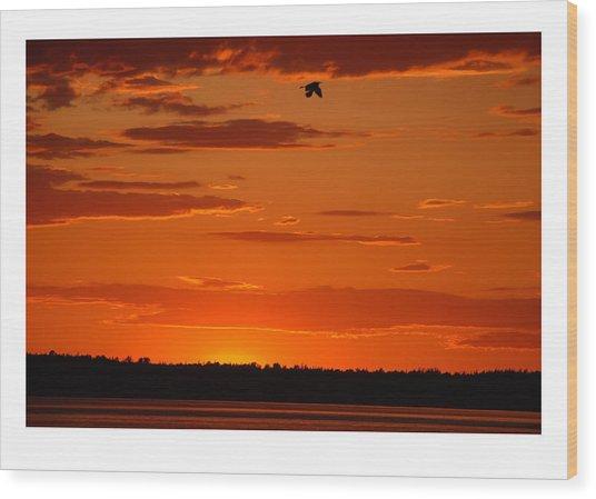 Heron Sunset Wood Print by J D Banks