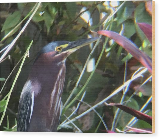 Heron With Yellow Eyes Wood Print