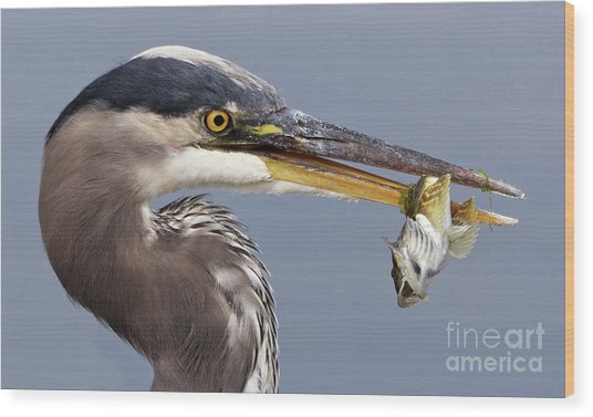 Herons Appetizer Wood Print
