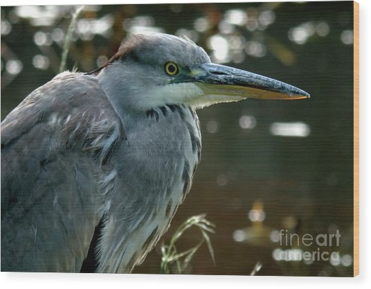 Herons Looking At You Kid Wood Print