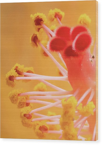 Wood Print featuring the photograph Hibiscus-2 by David Coblitz