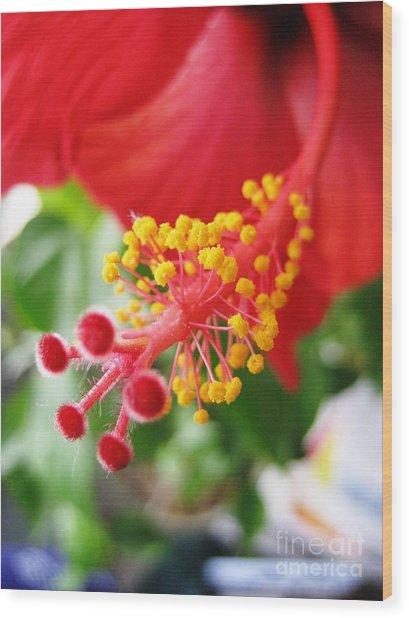 Hibiscus #3 Wood Print
