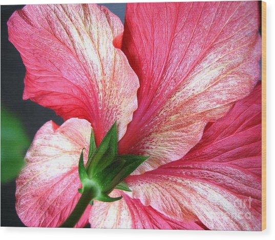 Hibiscus #5 Wood Print
