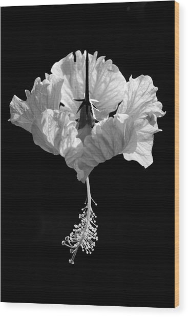 Hibiscus As Art 2 Wood Print