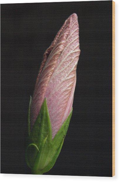 Hibiscus Bud - 1 Wood Print