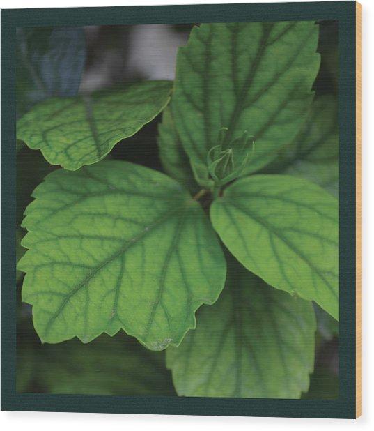 Hibiscus Bud 1 Wood Print