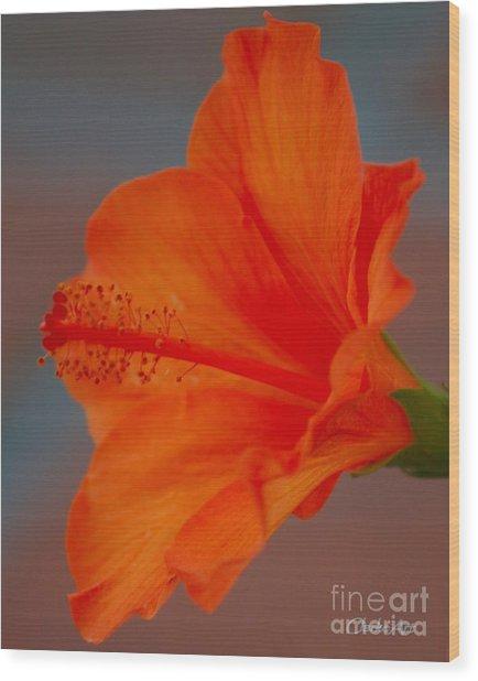 Hot Orange Hibiscus Wood Print