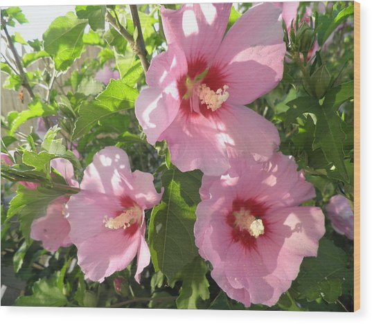 Hibiscus Wood Print by Kate Gallagher