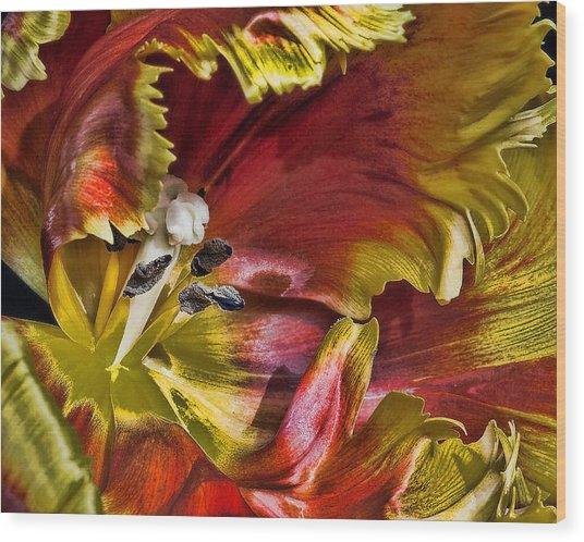 Hibiscus Spice Wood Print