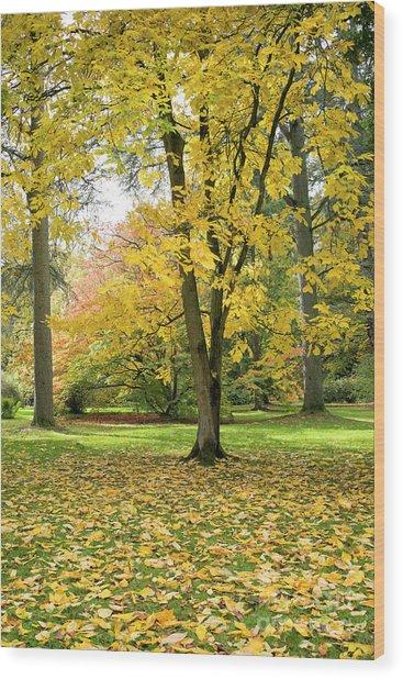 Hickory Autumn Wood Print