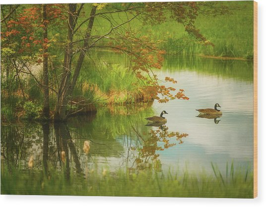 Hidden In Spring Wood Print