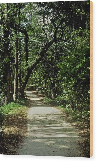 Hidden Path Wood Print